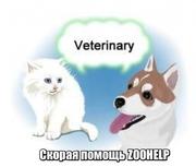 Ветеринарные услуги для животных